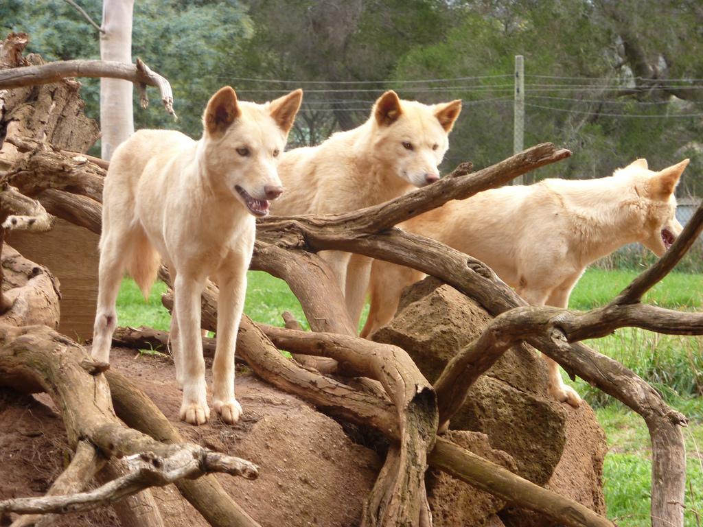 razas de perros puras
