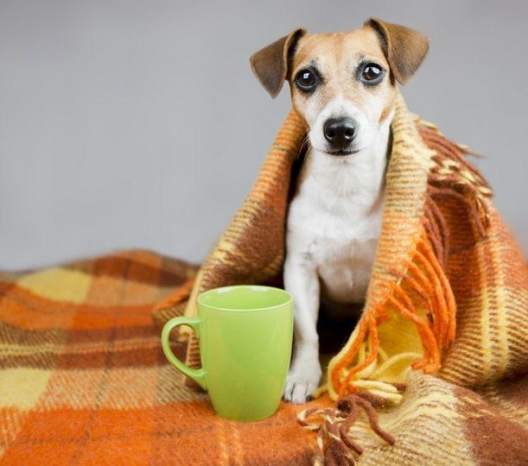 Señales de un perrito enfermo