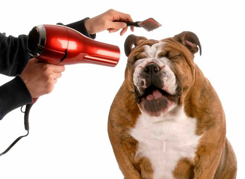 Bañar a un perro