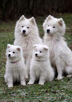 Toda una linda familia de eskimos