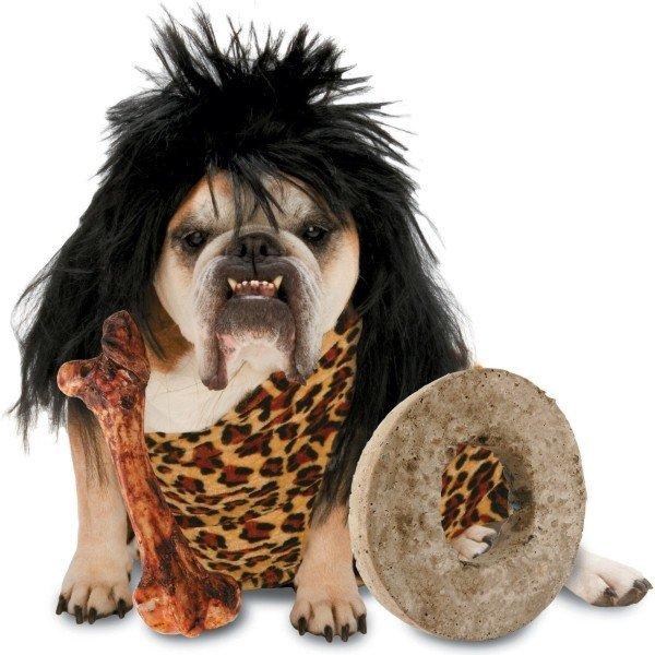 perro disfraz cabernicola