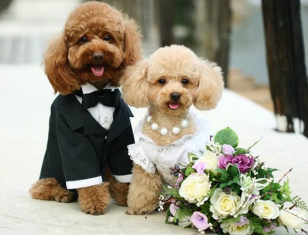 perros casándose