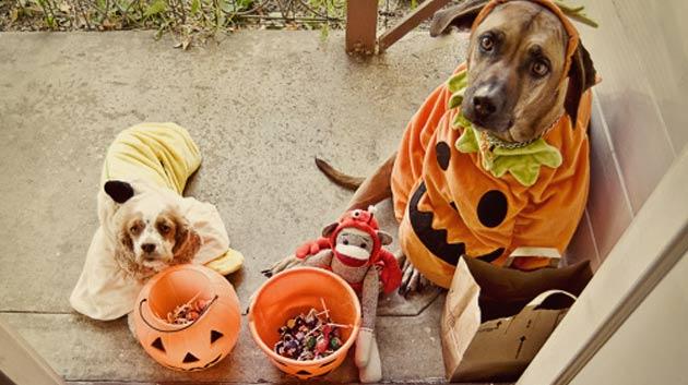 perro disfraces hallowen