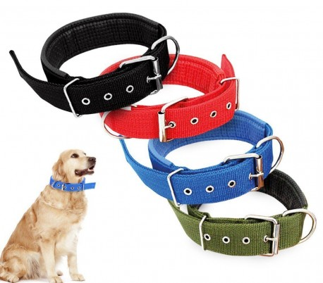 Collares para Perros