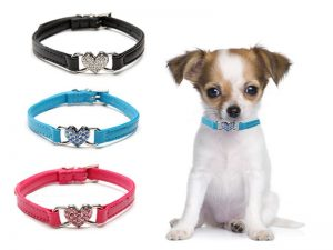 collares para perro