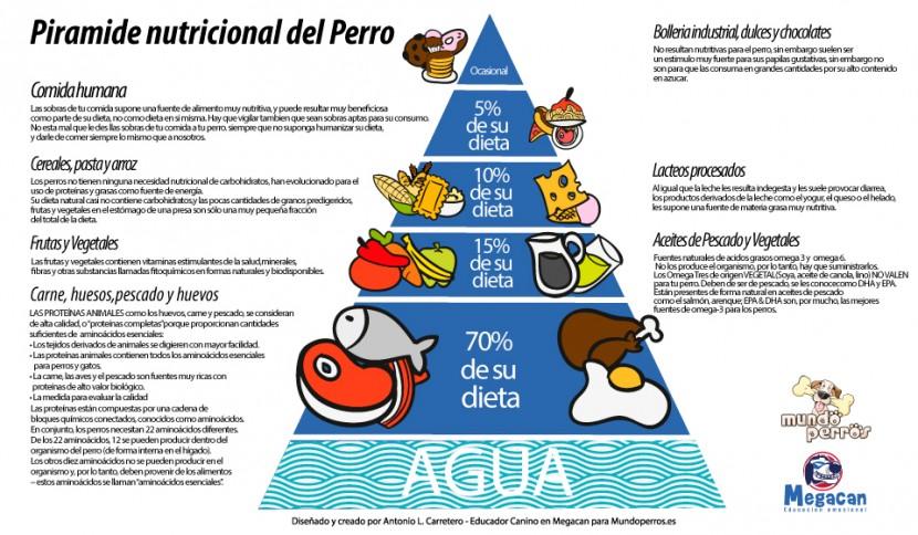 pirámide de la dieta de un de un perro