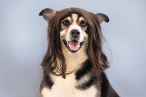 Cortadora de pelo para perros: Cuidando tu mascota