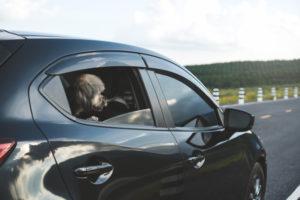 silla de auto para perros
