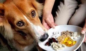 Vitaminas para Perros: Aportando los Nutrientes Necesarios