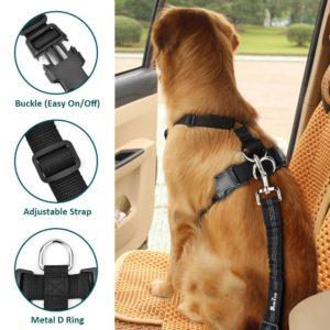 sistema efectivo de seguridad para el perro