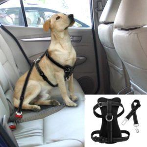 cinturones para carros de seguridad para perros