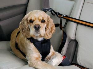 cinturones para carros de seguridad para el perro