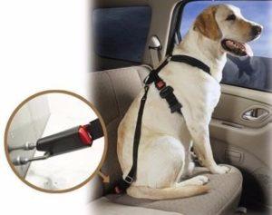 cinturones para carros de proteccion para perros
