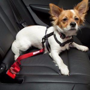 perros pequeños con cinturones de seguridad en el carro