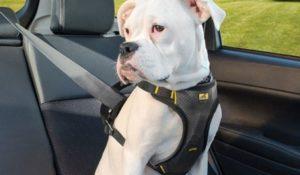 proteccion en el carro para perros con cinturones