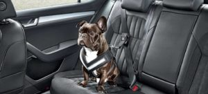 perros pequeños con cinturones de seguridad para carros