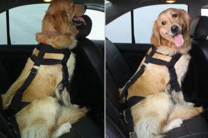 proteccion en el carro con cinturones para perros