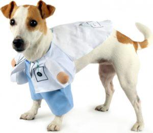 perritos con disfraz casero sencillo