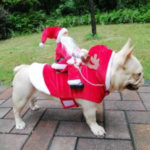 canino disfrazado de navidad