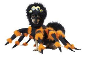 perruno con disfraz de halloween