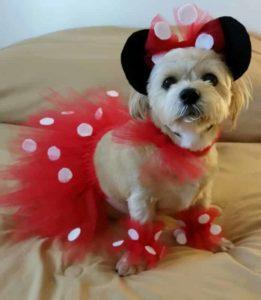 perrito chiquito con disfraz tierno