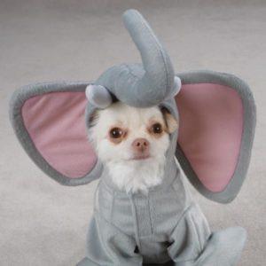 perrito tierno pequeño disfrazado