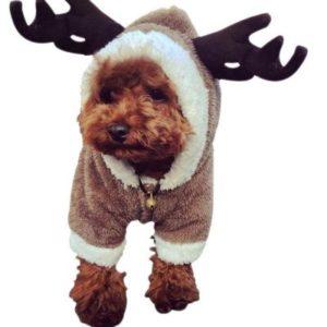 perrito de navidad hermoso