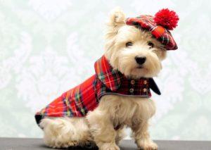 canino pequeño con disfraz