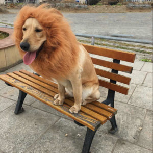 perro hermoso con su disfraz