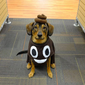 perrito disfrazado comico