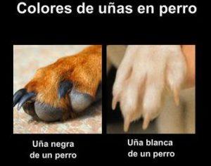 Color de las Uñas