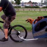 Los 5 Mejores Remolques para perro