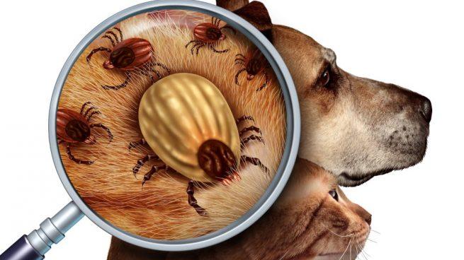desparasitantes para perros pastillas antiparasitarias perros
