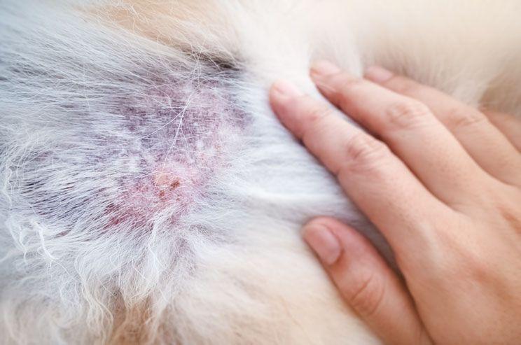 antipulgas para perros