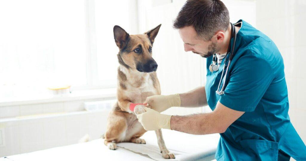 crema cicatrizante perros spray cicatrizante perros