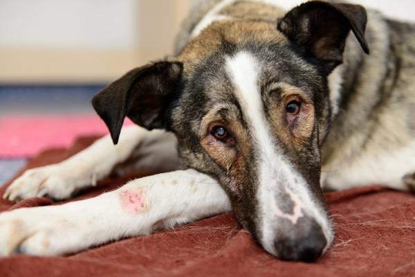 pomada cicatrizante perros pomada cicatrizante heridas perros