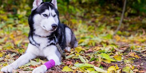 crema cicatrizante para heridas pomada cicatrizante almohadillas perros