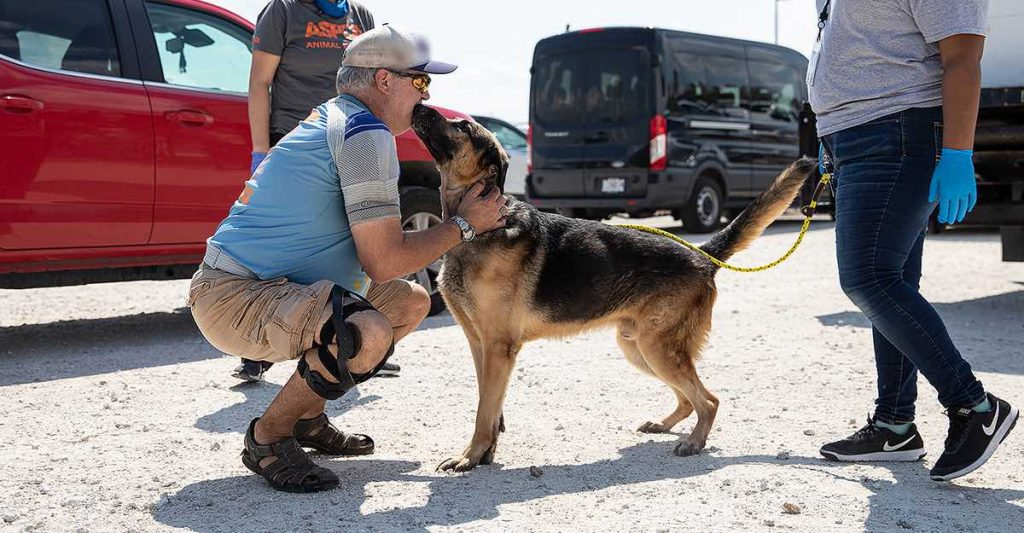 perros de policia en adopcion