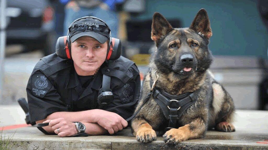 entrenamiento perros policia