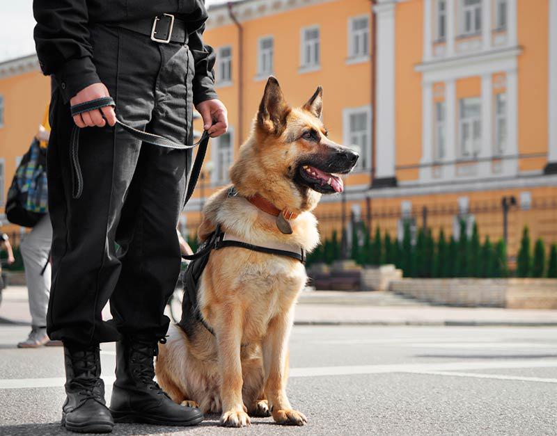 perros pastor aleman policias