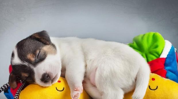 los perros sueñan con sus dueños que sueñan los perros