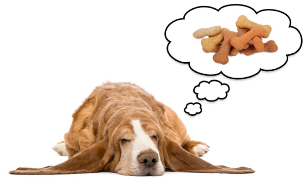 cuantas horas duerme un perro que sueñan los perros