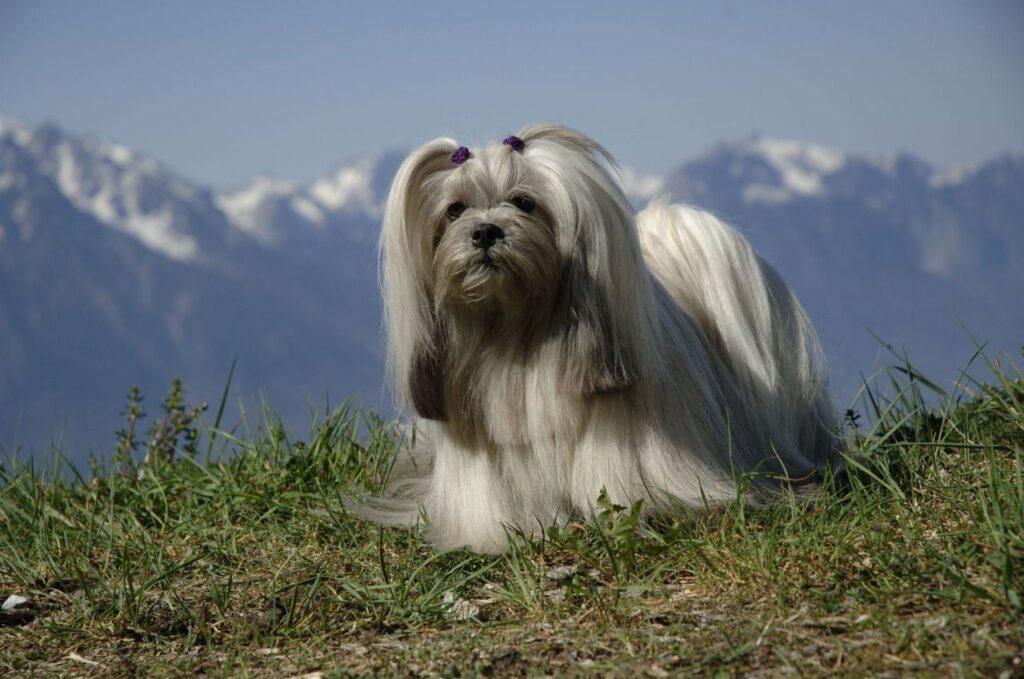 perros de compañia certificado