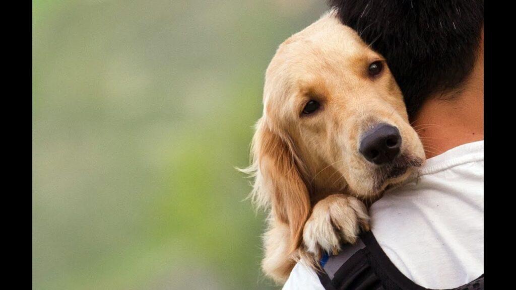 los mejores perros de compañia pequeños