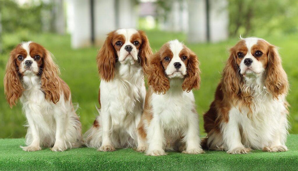 perros de guardia y compañía