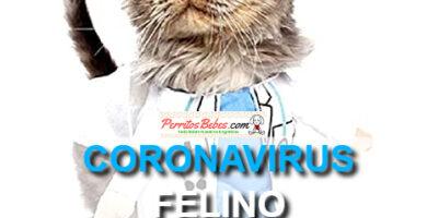 coronavirus de gatos