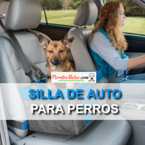 asientos para cachorros