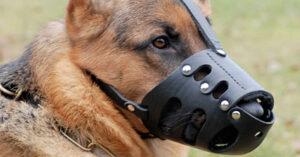 Bozal para Perros: Los 5 Mejores para Protegerlos