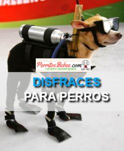 Disfraces para Perros: Tiernos, Divertidos y Alegres
