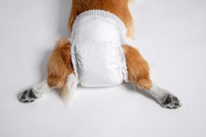 Pañales para Perros: Los Ideales para que estén sequitos